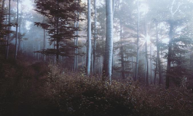 woods-918512_1280